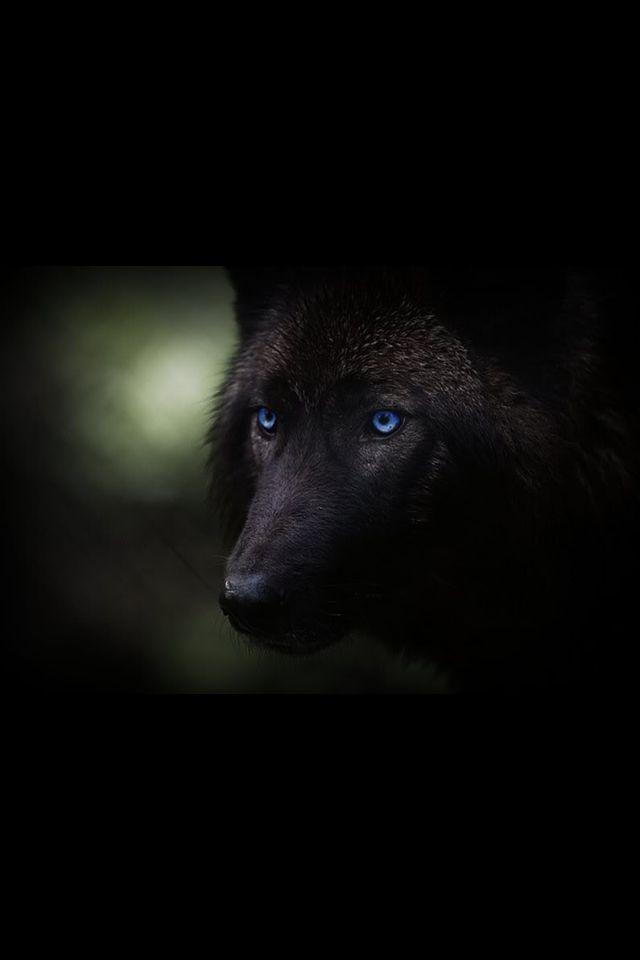 Lobos Negros                                                                                                                                                                                 Más