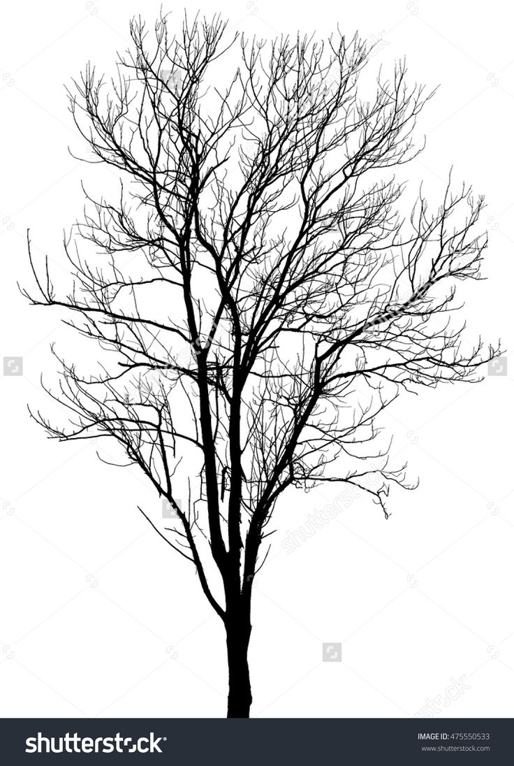 best 25 tree silhouette ideas on pinterest family tree drawing