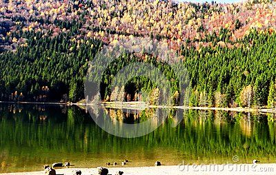 Lake in Roumania dramatic surroundings with  autumn colors forest at lakeside and reflection on lake