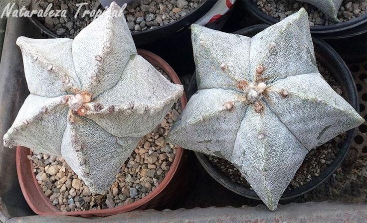 NATURALEZA TROPICAL trae un montón de información curiosa sobre unas de las plantas que más nos gustan... ¡¡¡CACTUS CACTUS CACTUS!!!