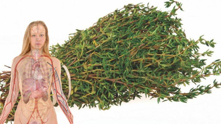 Cimbrul, o planta excelenta pentru sanatatea inimii si a oaselor. Trateaza acneea si ucide bacteriile - dr. Andrei Laslău