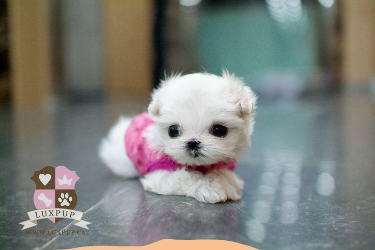 best 25 cute baby dogs ideas on pinterest cute pups