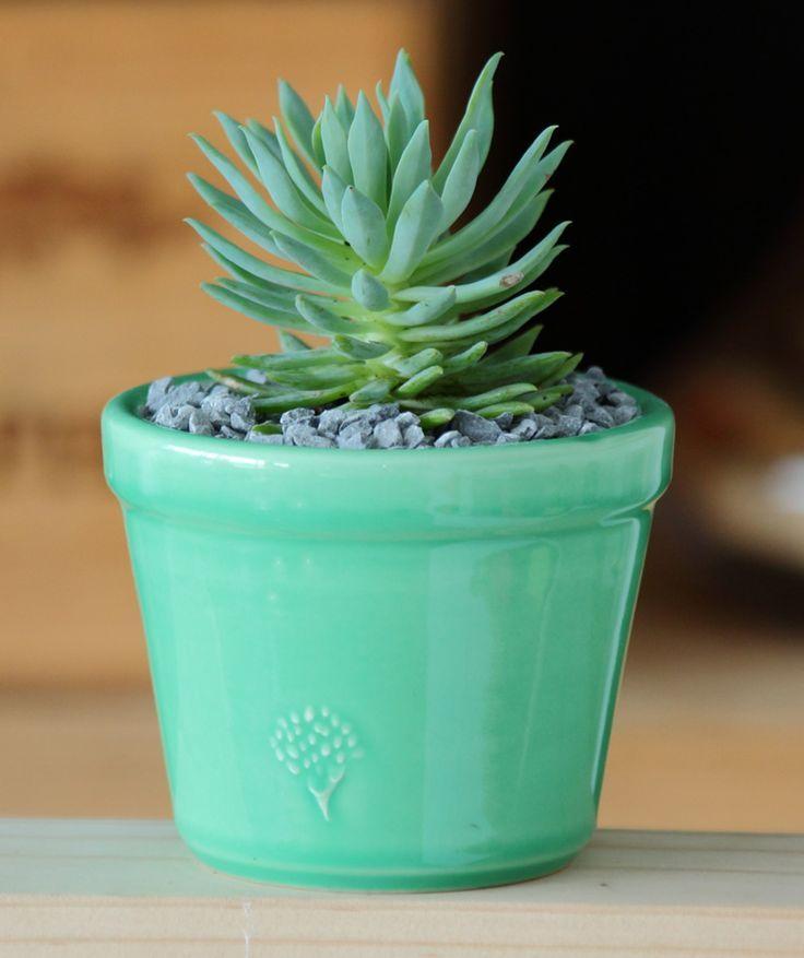 Las 25 mejores ideas sobre decoraci n verde menta en for Pintura verde aguamarina