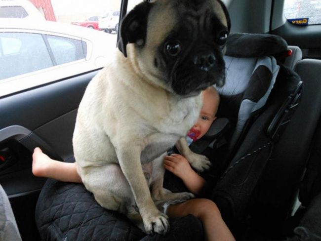 15 hilarious dogs who have absolutely no understanding of personal space