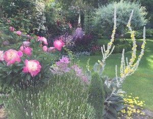 late june 2015 the flower spikes produce side shoots and a carpet of petals on the spikesthe flowersgarden designcarpets