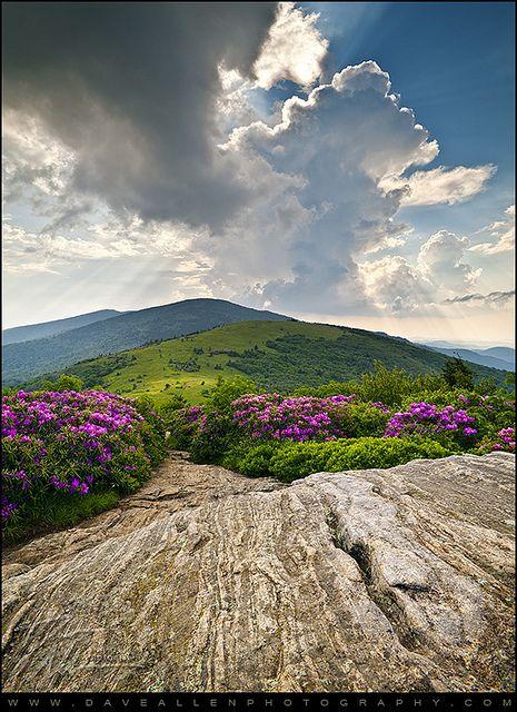 Appalachian Trail - N. Carolina