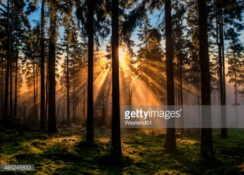 Stock Photo : Germany, Hesse, Feldberg, sunrise and morning mist