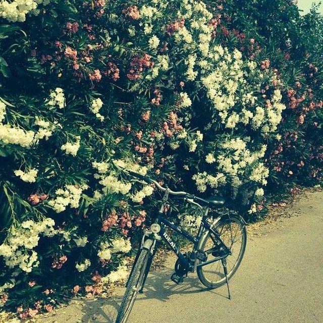 Zakynthos er perfekt for den, som kan lide at være aktiv på sin ferie! Nabobyen til Laganas hedder Agios Sostis og dette er et perfekt sted at gå ture eller cykle! Det er et lidt mere afslappende og lokalt område end det pulserende Laganas. Du kan læse mere iom Zakynthos her: www.apollorejser.dk/rejser/europa/graekenland/zakynthos