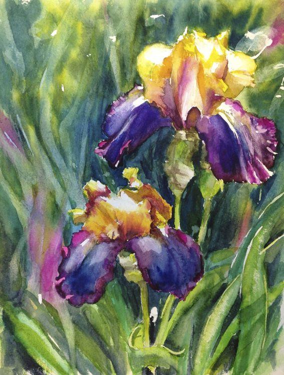 Aquarelle Iris Fleur Peinture Tableau Art Dessin Fleur Deco