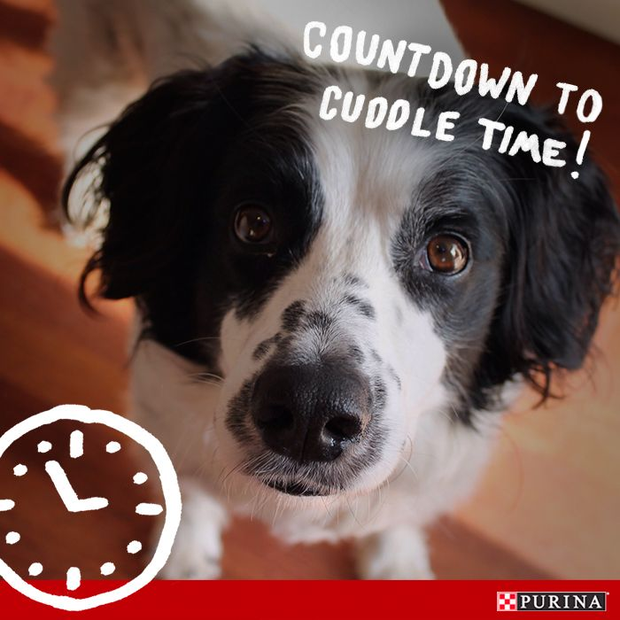 Do you count down the moments to see your dog when you're apart? We bet the feeling is mutual! Here are some dog games and activities you can do with your dog after long days apart!