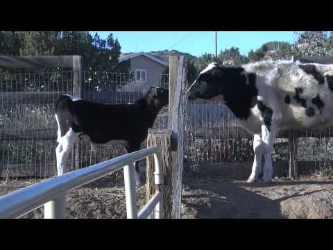 """Farm Sanctuary can save a few, it's up to """"us"""" to defend the rest. Speak out against Factory Farms"""