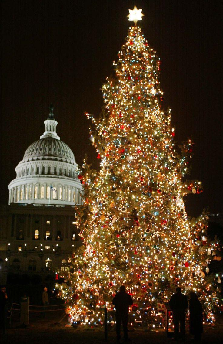 Τα ομορφότερα Χριστουγεννιάτικα δέντρα