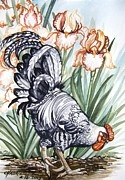 Chicken Watercolor Paintings - Apricot Iris Bravo Rooster by Anne Shoemaker-Magdaleno