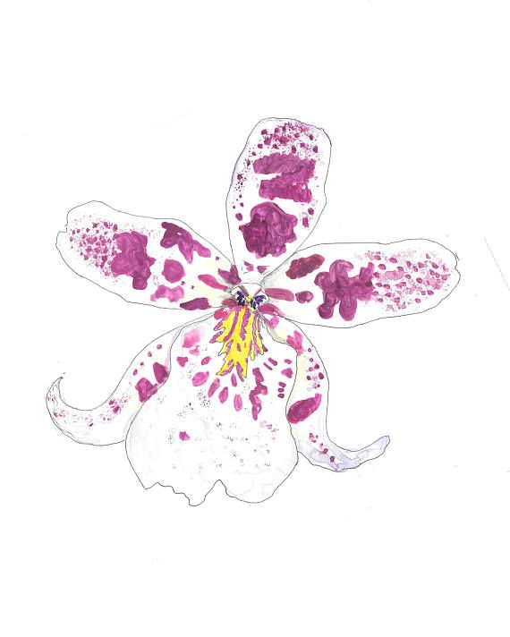 Cattleya Orchid Hand Drawn Watercolor Illustration Cattleya Orchid Cattleya How To Draw Hands