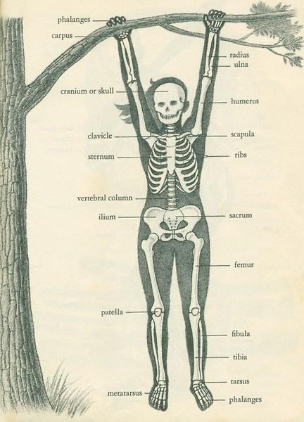 bones, bones, bones!