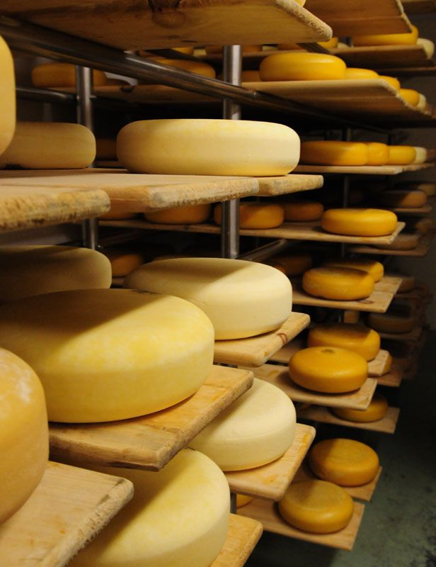 THE ART AND SCIENCE OF MAKING CHEESE