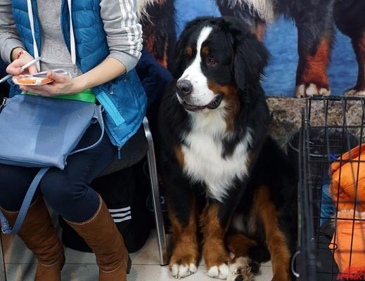 Международная выставка собак в Перми/