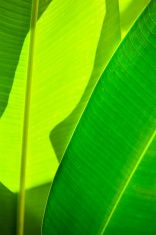 Red Ginger Tropical Leaves Abstract Nature Vertical stock photo
