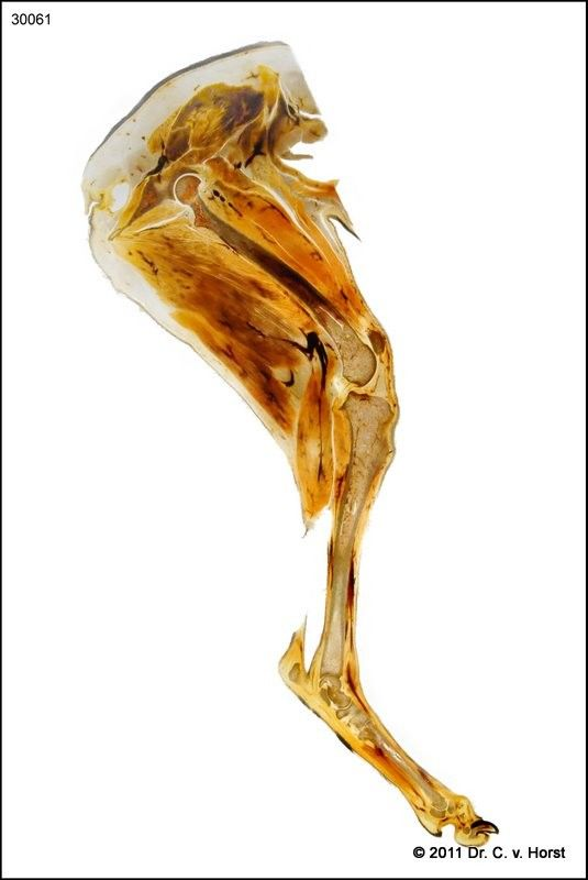 Outstanding Canine Knee Anatomy Inspiration - Image of internal ...