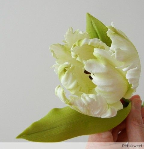 Parrot Tulip...by Petalsweet Cakes.