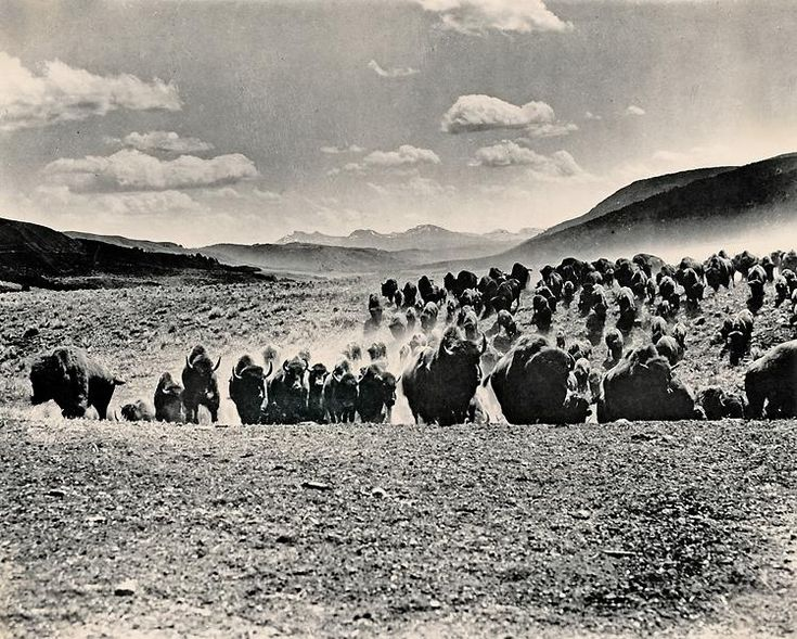 Lords of the Prairie The Plains Indians had tried to keep the settlers from taking their land. By 1880 the buffalo were almost gone. This herd of…