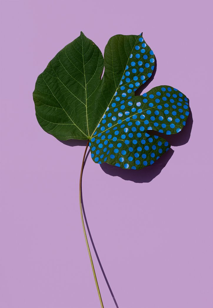Sarah Illenberger | Wonderplant....real plants, painted with stickers and colored tape.                                                                                                                                                      More