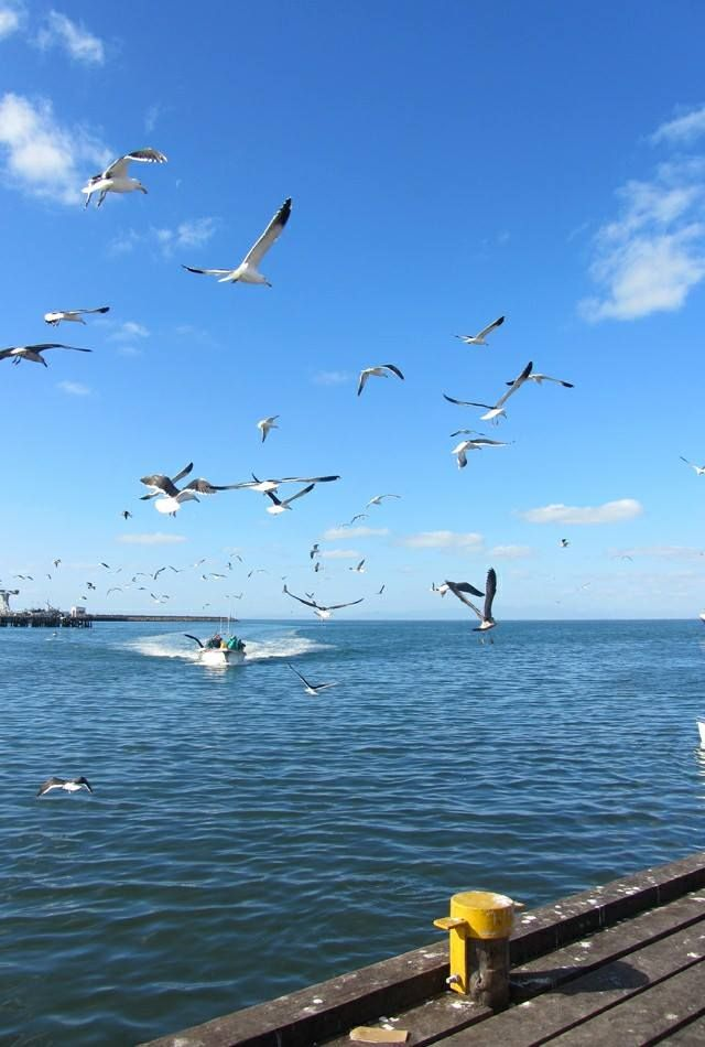 MINE ALL MINE - As the boats come in the birds descend!  #harbour #boats #fishing#birds #seagulls #westcoast #southafrica