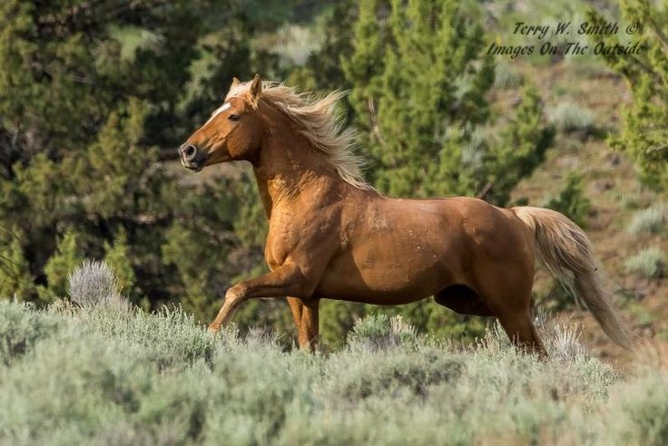 17 Best Images About Beautiful Wild Horses Still Running