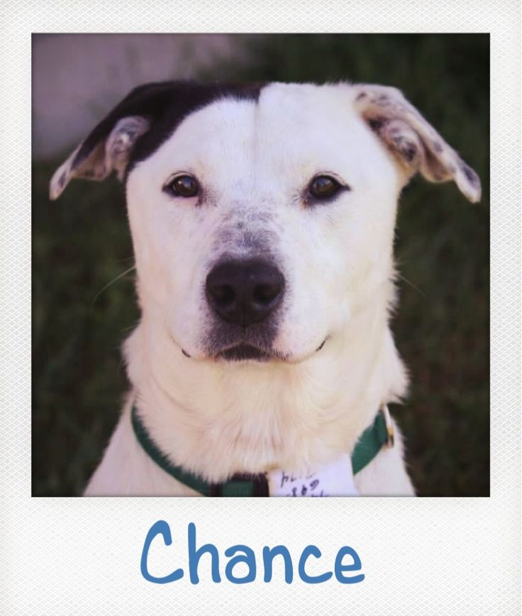 Chance -For the Love of Paws Animal Rescue