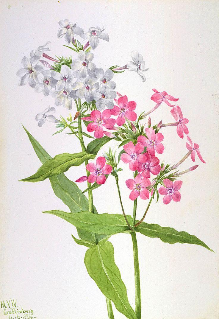 Низкорослые цветы для клумб  дизайнерские решения