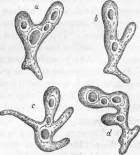 Protozoa. Part 6: Fig. 7. Aniaba, showing the vacuoles in its sareodic substance, a, b, c, d, some of the various shapes which it assumes.