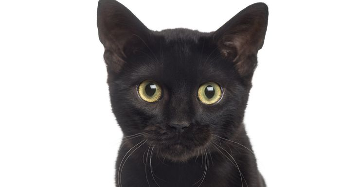 Stop Hating On Black Cats! It's National Black Cat Day!   The Huffington Post