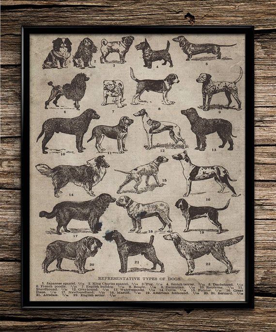 Vintage Types of Dogs | Vintage Prints | Animal Prints | Home Office Decor | Printable Wall Art | Vintage Wall Art | 8x10 | Instant Download