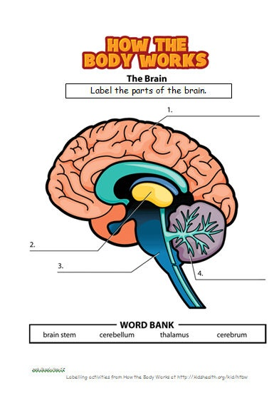 Workbook collated and designed to support investigation into major body organs and how to keep them healthy.