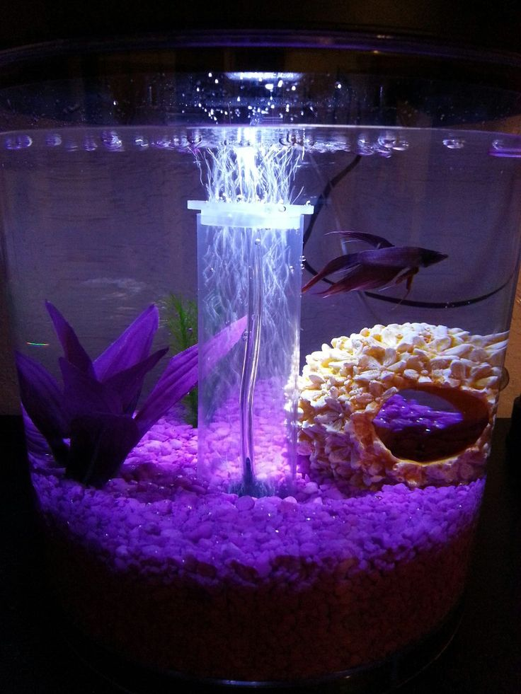 129 best images about aquariums desktop betta on pinterest for Best place to buy betta fish