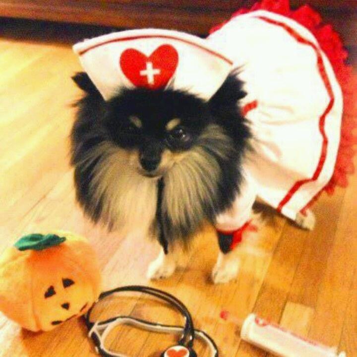 Can Dogs Nurse Kttens