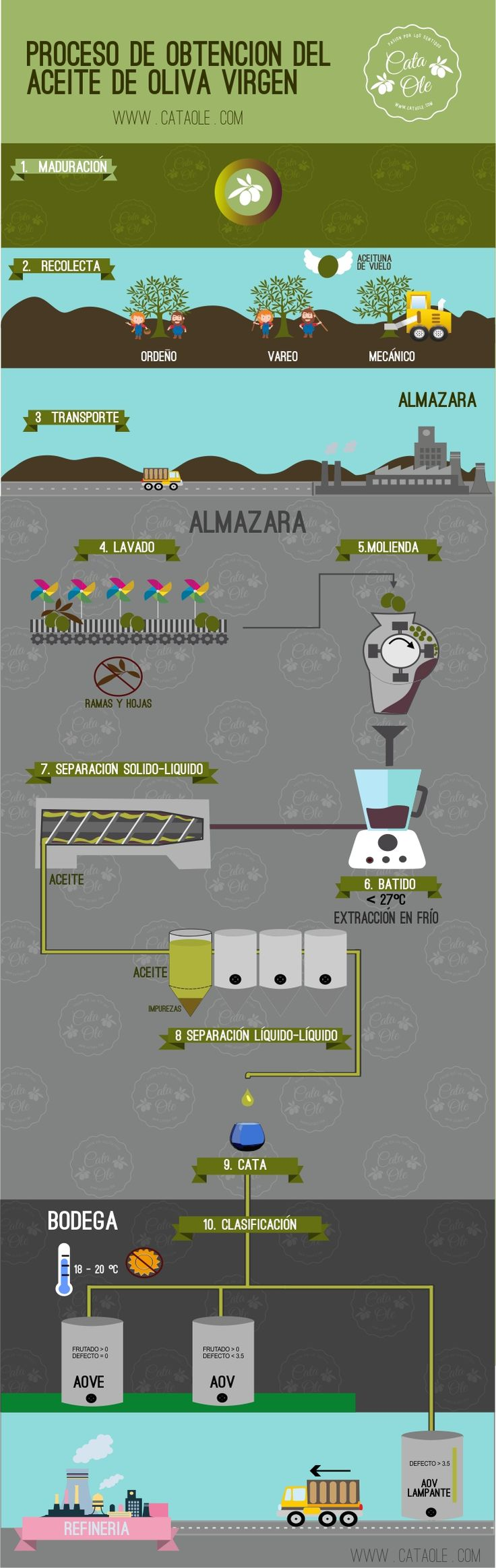 infografia_obtencion_clasificacion_aceites_olivas_virgen_aove_aov_lampante_