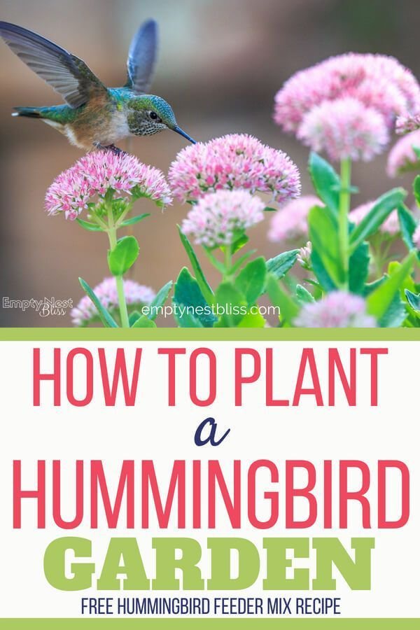 12++ What type of flowers attract hummingbirds ideas in 2021