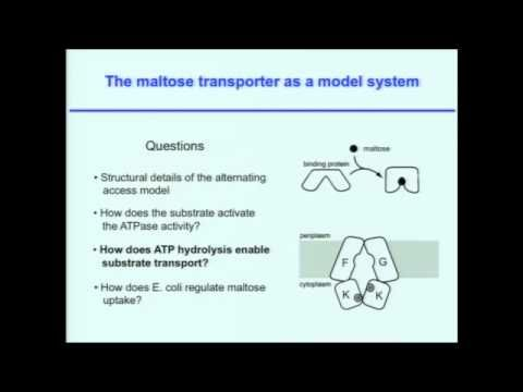 Structural and Mechanistic Studies of ABC Transporters: Nature's Favorit...