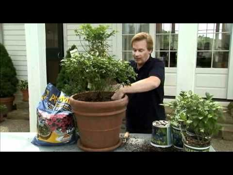 Learn how to plant blueberries in containers from gardening and outdoor living expert P. Allen Smith