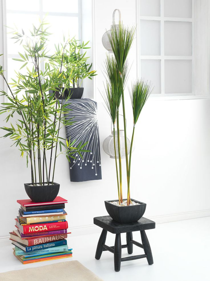 17 best images about plantas interior on pinterest ps for Soporte plantas interior