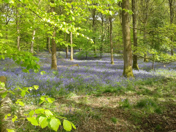 Bluebell walk at the weekend in the Forest of Dean....breathtaking!