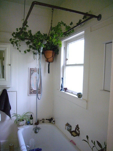 Vine growing around the shower curtain rods <3