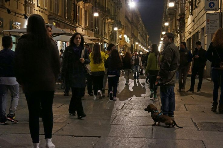 Turin (Italy )evening with dog by Arnie D'Amico on 500px Late evening in Turin. with dog. really nice dog. dachshund dog