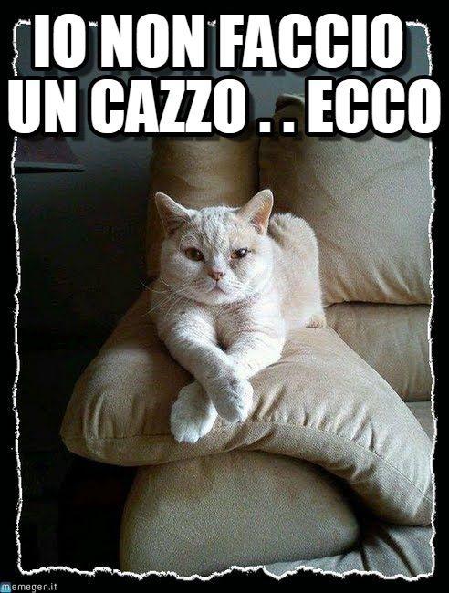 #ridere #ridiamo #humor #satira #umorismo #satirapolitica #sbruffonate #chucknorris