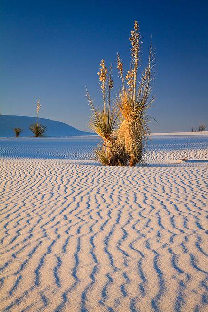 Monumento Nacional das Areias Brancas, Novo Mexico, USA.