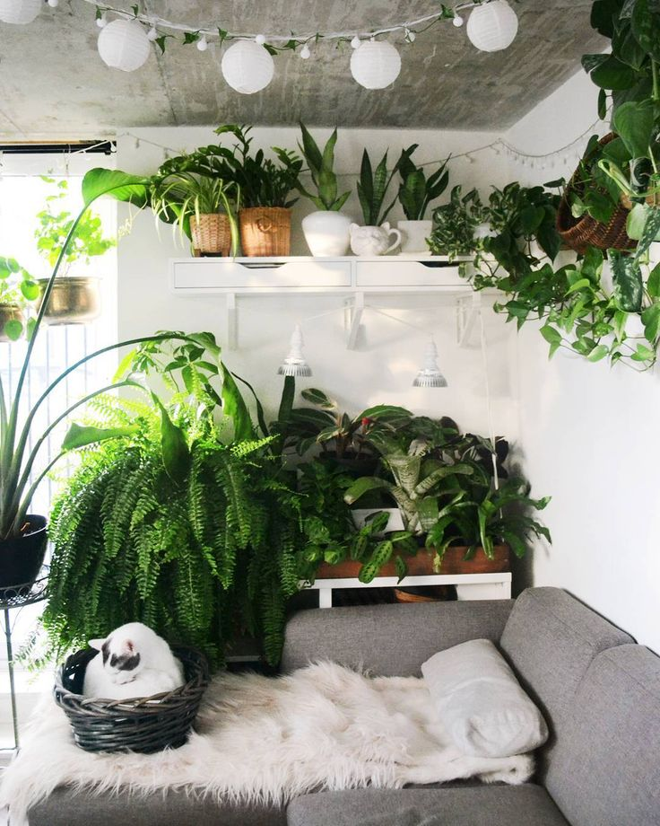 Indoor Apartment Plants: 78 Best Studio (@studioplants) Images On Pinterest