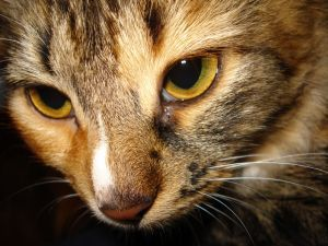 Kidney Failure in Cats Symptoms and Treatment I have a great article  poidogsanuenue.vpweb.com Healing tips article 2