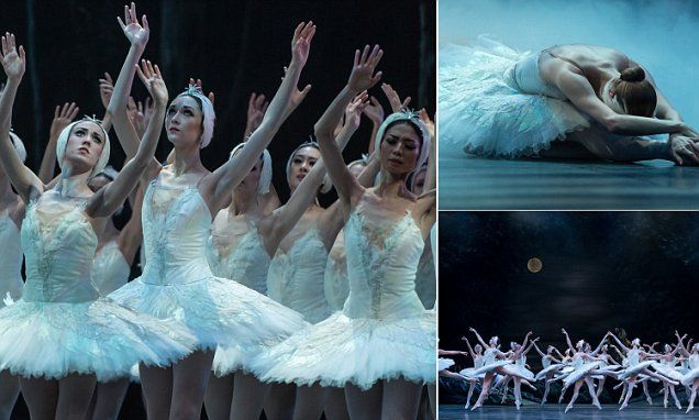Dancers from Tamara Rojo's English National Ballet look in fine form in these pictures ahead of  the first performance of Swan Lake at London's Coliseum tonight.
