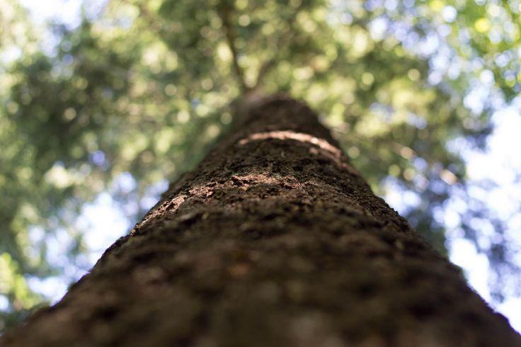Tree bokeh - Clickasnap